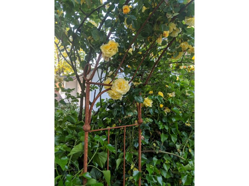 Gemeinsame Rosenbogen LINZ Breite: 1,40 m oder 1,60 m Schwere, stabile Ausfüh... @UX_43