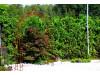 Rosenbogen HOLLAND mit Lilie-Spitze 2,20 m Eisen Massiv Rosenbogen für deinen Garten, erhältlich in drei Varianten: Rost, V...
