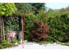 Rosenbogen LINZ Eisen Massiv Rosenbogen für deinen Garten, erhältlich in drei Varianten: Rost, Verzinkt oder Schwarz